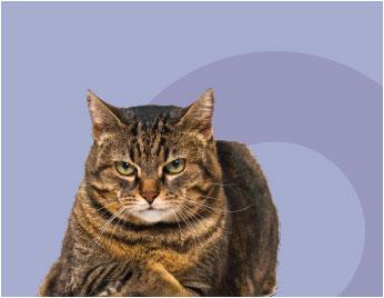 cat-mauve