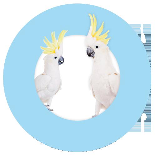 gutsy-cockies